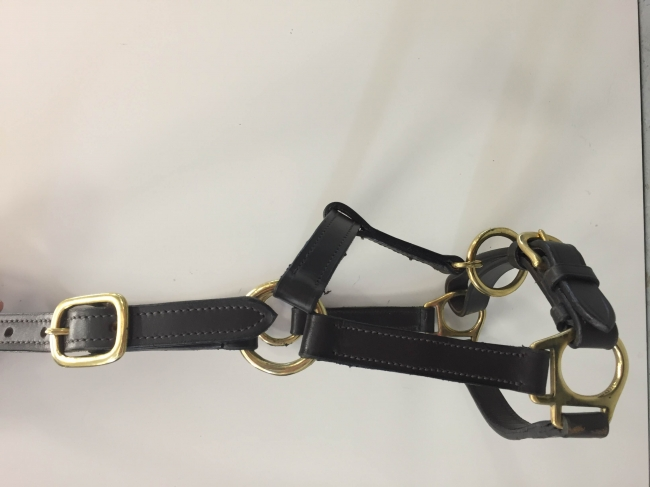 FOAL LEATHER HEADCOLLAR