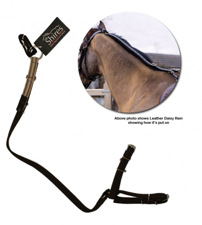 shires-daisy-reins474369_650
