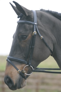 JOHN WHITAKER JW1 FLASH BRIDLE