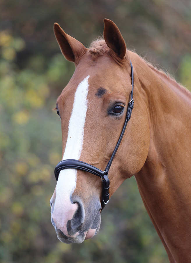 mackey drop noseband