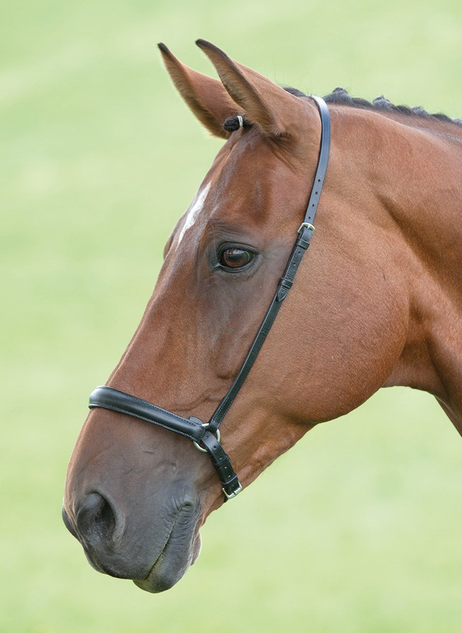 shires blenheim drop noseband