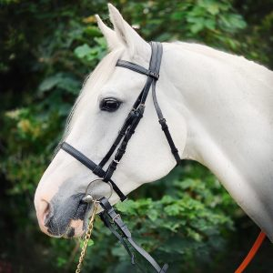 Holmestead Saddlery | Best Tack Store | Equestrian Shop